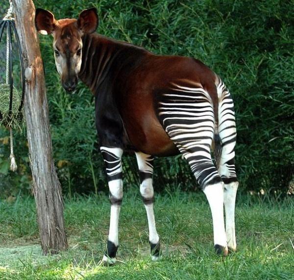 Самые редкие и уникальные животные в мире.